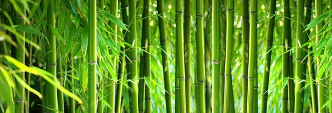 bamboo fiber.png